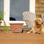 Smart Ways to Deal with Tenants That Has Pets